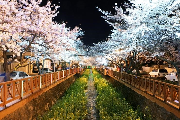 Finding the right attraction to see cherry blossoms for you!